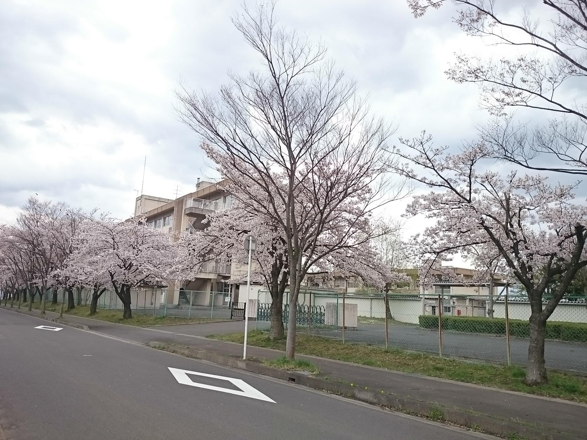 中学 (2)