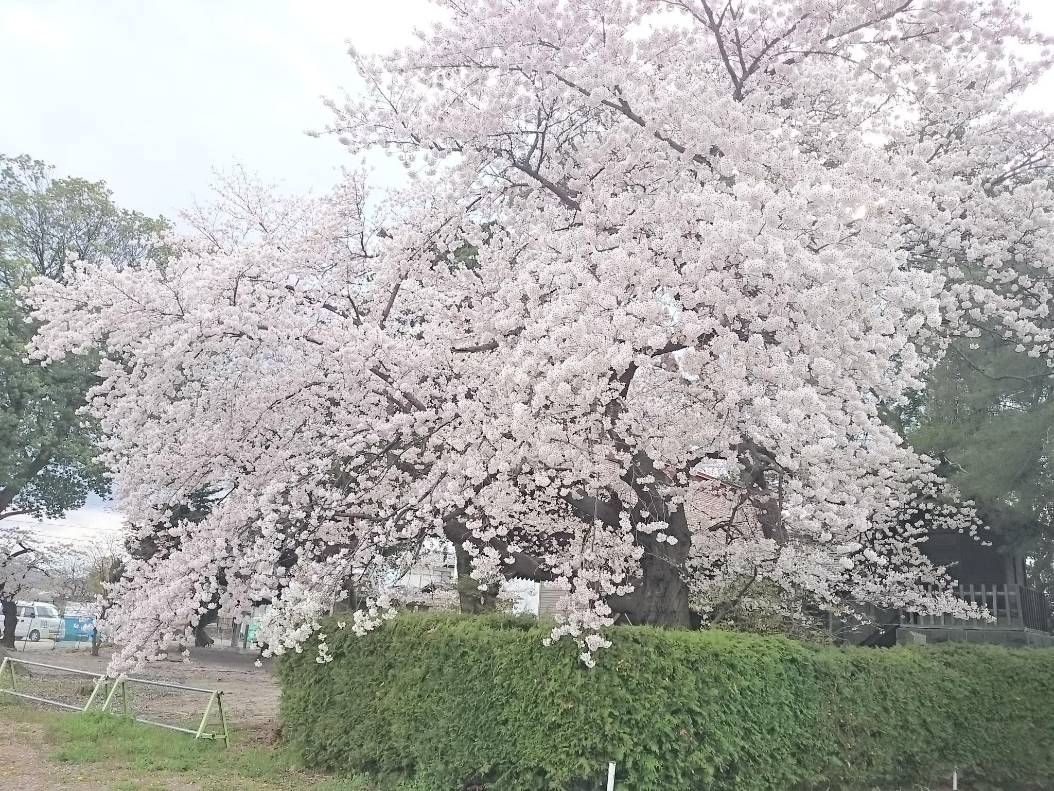 八田神社 (2)