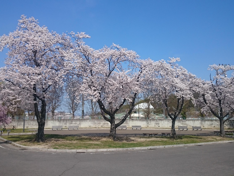 森合運動公園 (2)