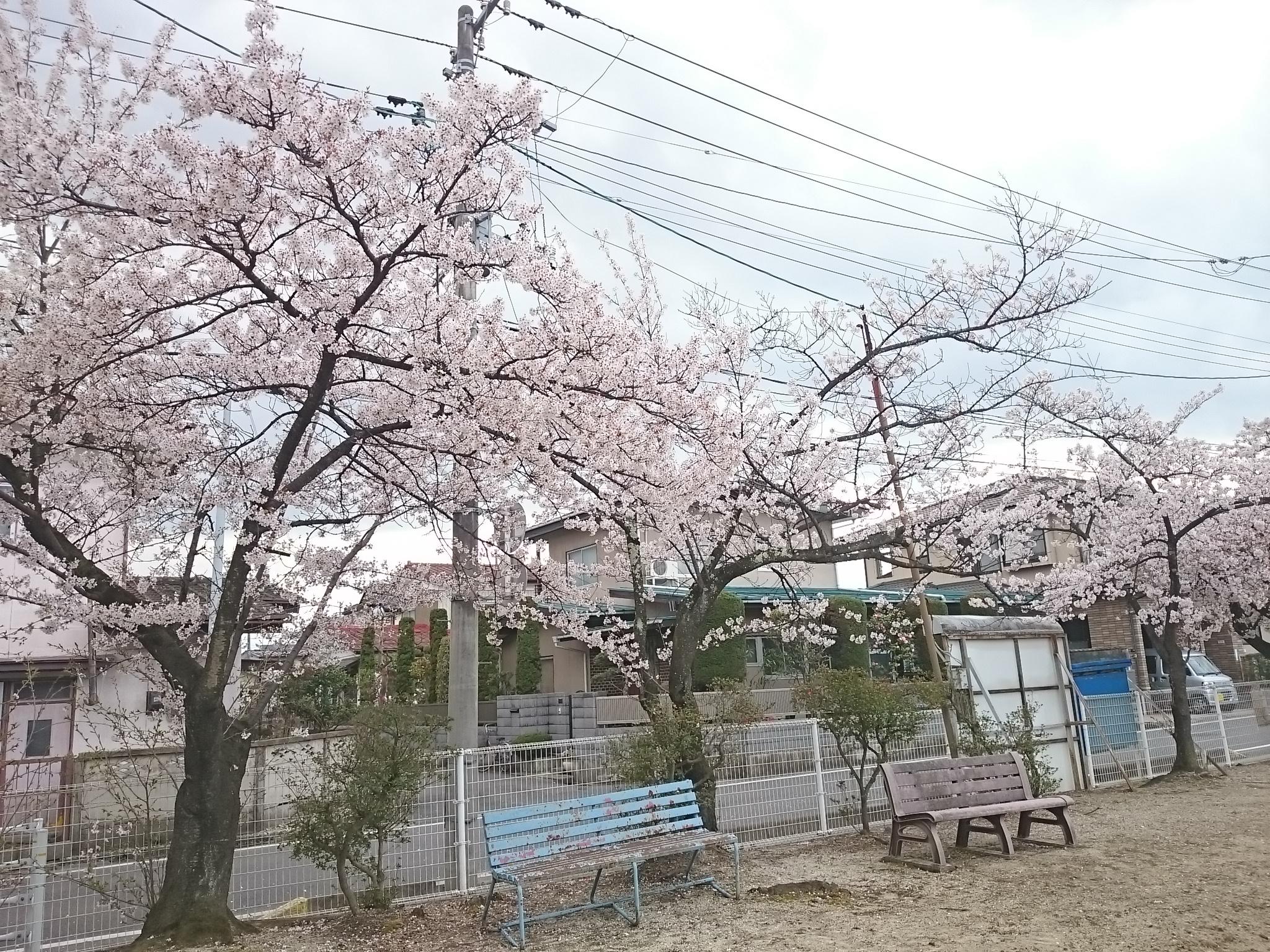 小公園 (2)