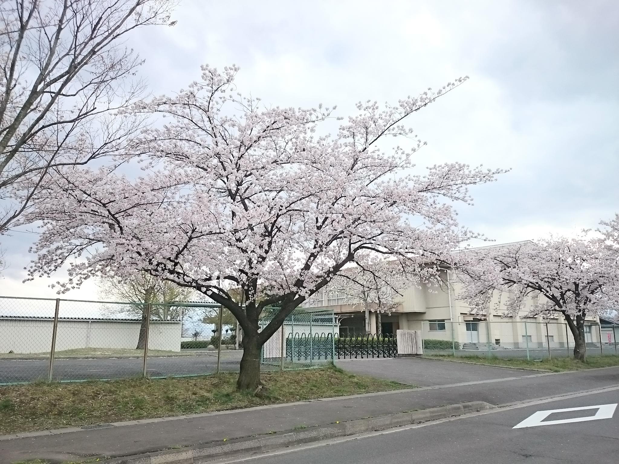 中学 (3)