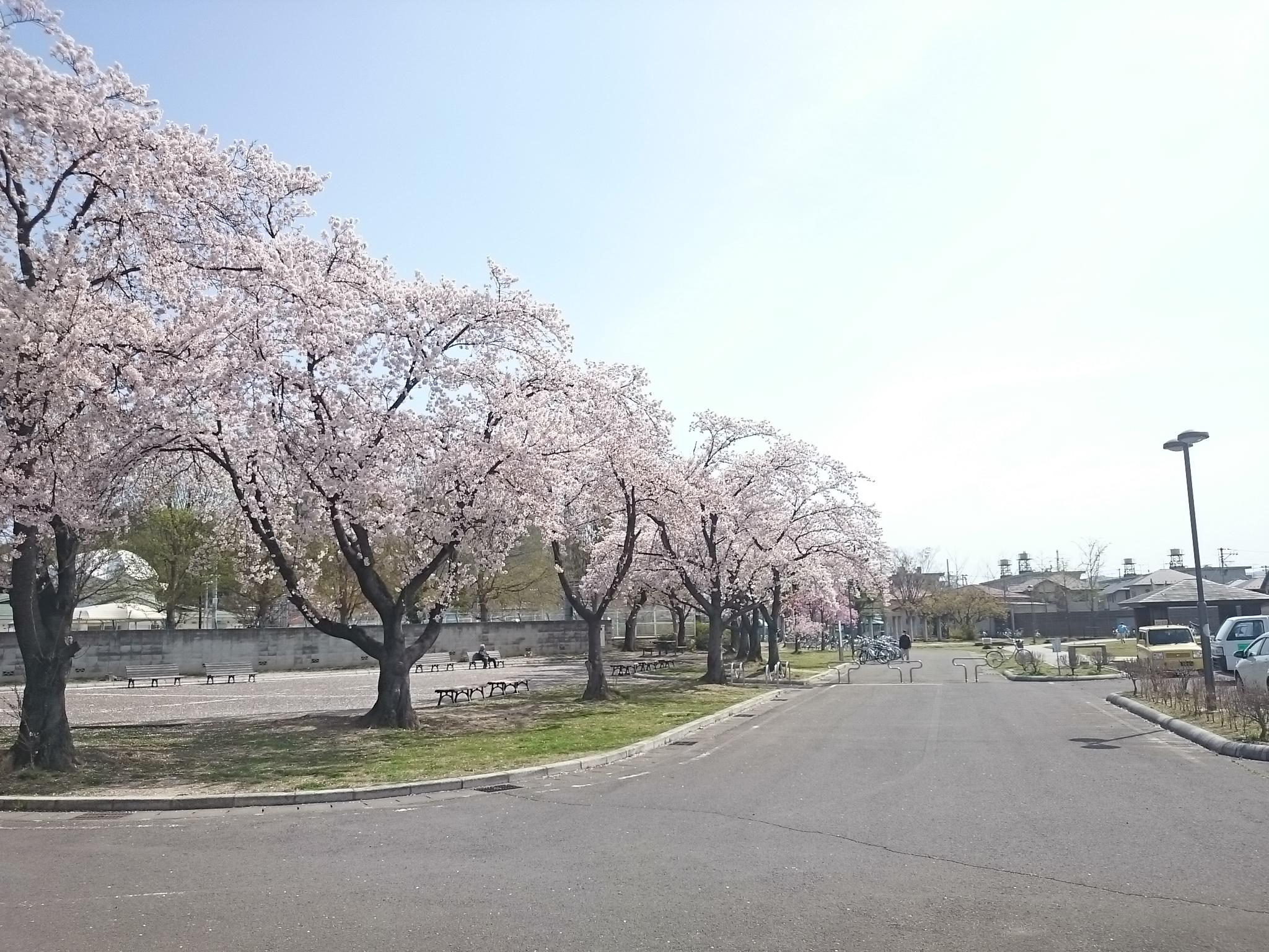 森合公園 (2)